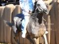 CavalloCattedrale SfilataCorsaPalio2016-1616